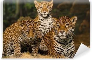 Vinylová Fototapeta Jaguar Family
