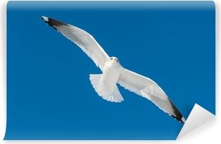 Vinylová Fototapeta Jeden bílý pták mouchy