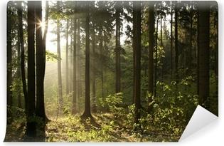 Vinylová Fototapeta Jehličnaté lesy podsvícený vycházejícího slunce na mlhavý den
