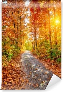 Fototapeta winylowa Jesienny las