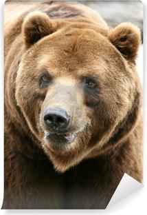 Fototapeta winylowa Kamczatka Brown Bear