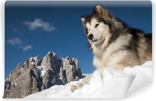 Fototapeta winylowa King of the Mountain