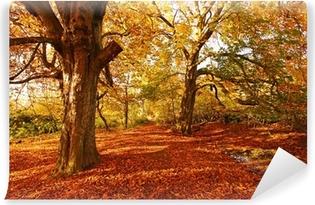 Vinylová Fototapeta Krásné Podzim v parku