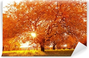 Vinylová Fototapeta Krásné podzimní strom s spadané suché listí