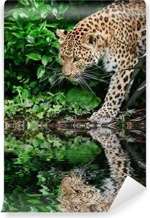 Vinylová Fototapeta Krásný leopard Panthera Pardus velká kočka mezi zeleň reflec