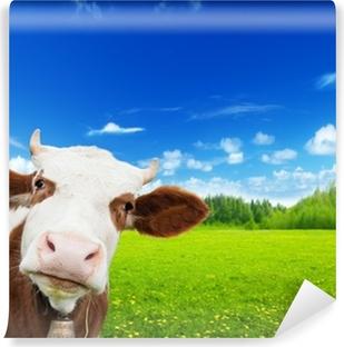 Vinylová Fototapeta Kráva a pole čerstvé trávy