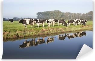 Vinylová Fototapeta Krávy na louce v blízkosti Zeist v Nizozemí