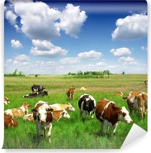 Vinylová Fototapeta Krávy na zelené letní louky
