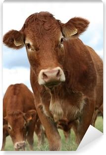 Fototapeta winylowa Krowa portret