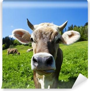 Fototapeta winylowa Krowy na pastwisku