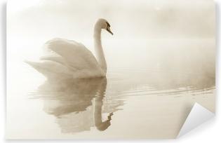 Fototapeta winylowa Łabędź niemy Cygnus olor poślizg w poprzek jeziora pokryte mgły o świcie