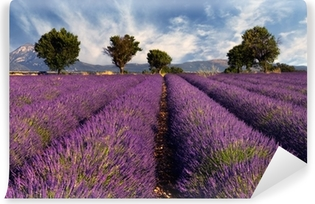 Vinylová Fototapeta Lavender pole v Provence, Francie