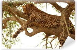 Vinylová Fototapeta Leopard na stromě