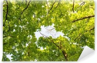 Vinylová Fototapeta Lesní a nebe