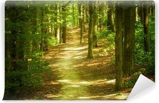 Vinylová Fototapeta Lesní krajina