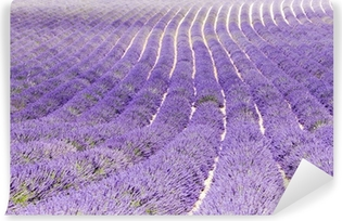 Vinylová Fototapeta Levandule pole, plateau de Valensole, Provence, Francie