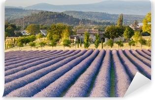 Vinylová Fototapeta Levandulová pole v Provence