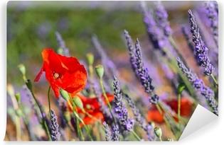 Vinylová Fototapeta Levandulová pole ve Francii s červenými máky
