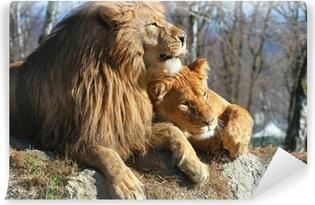 Fototapeta winylowa Lew i lwica