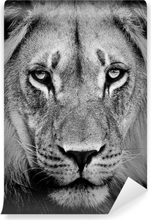 Vinylová Fototapeta Lion portrét