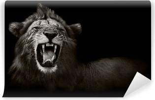Vinylová Fototapeta Lion zobrazení nebezpečné zuby