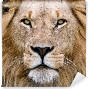 Vinylová Fototapeta Lion