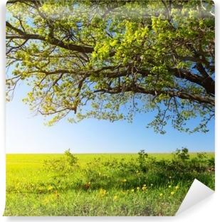 Fototapeta Winylowa Majestatyczne drzewo