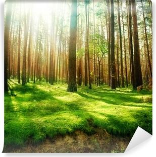 Vinylová Fototapeta Misty Old Forest