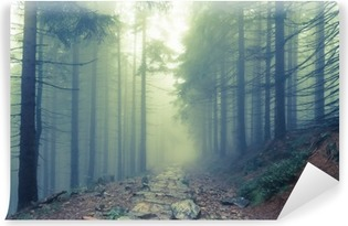 Vinylová Fototapeta Mlha v strašidelném lese