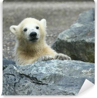 Fototapeta winylowa Młody niedźwiedź polarny