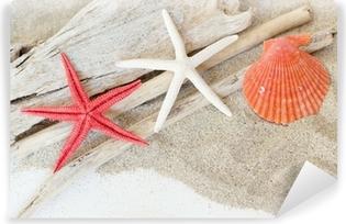 Znalezione obrazy dla zapytania muszle morskie i rozgwiazdy zdjęcia