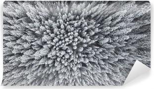 Fototapeta winylowa Mrożone Las sosnowy z powietrza