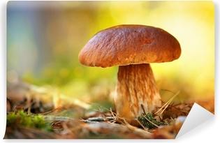 Fototapeta winylowa Mushroom Cep Uprawa w lesie jesienią. Borowik