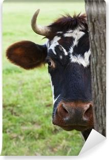 Vinylová Fototapeta Normandie Kráva pohledu zpoza stromu