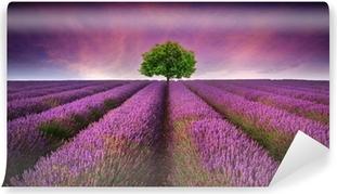 Vinylová Fototapeta Ohromující Levandulová pole krajina Letní západ slunce s jedním stromem