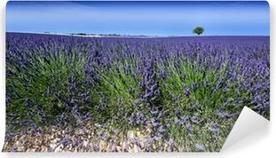 Vinylová Fototapeta Panoramatický pohled na levandulová pole v Provence, Francie