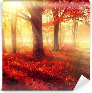 Vinylová Fototapeta Podzim scény. Krásné podzimní parku na slunci