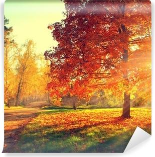 Vinylová Fototapeta Podzimní scéna. Fall. Stromy a listí ve slunci