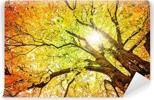 Vinylová fototapeta Podzimní strom
