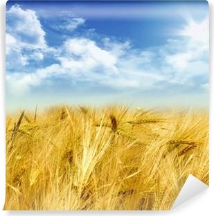 Fototapeta winylowa Pole kukurydzy