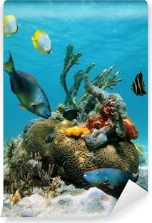 Fototapeta winylowa Powierzchni wody i morskiego życia