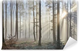 Fototapeta Winylowa Promienie słoneczne w mglistym lesie
