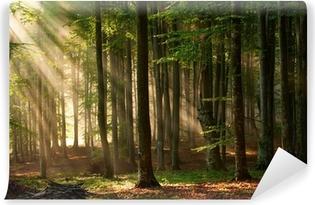Fototapeta winylowa Promyki słońca przebijają się przez las