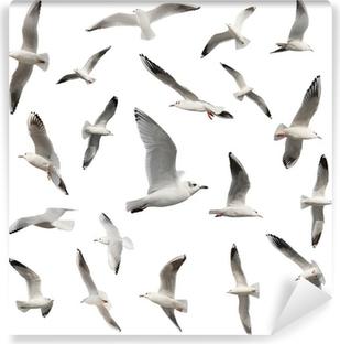 Vinylová Fototapeta Ptáci kolekce izolovaných na bílém