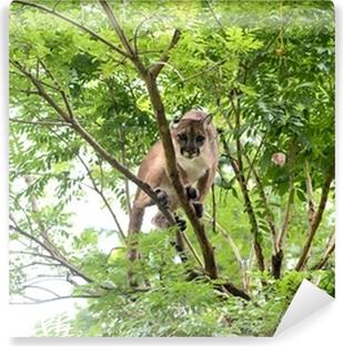 Fototapeta winylowa Puma wspinaczka na drzewo