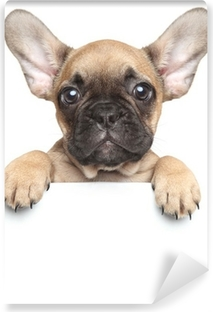 Fototapeta winylowa Puppy na białym sztandarem