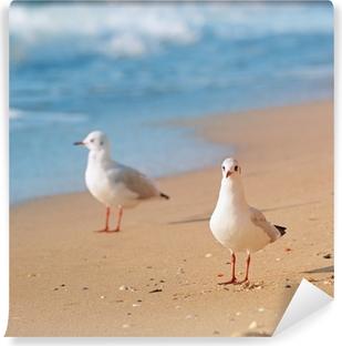 Vinylová Fototapeta Rackové, moře a písečné pláže