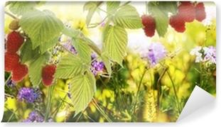 Vinylová Fototapeta Raspberry.Garden maliny na Sunset.Soft kostce