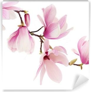 Fototapeta winylowa Różowy wiosna kwiaty magnolii oddział