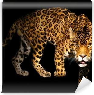 Vinylová Fototapeta Rozzlobený divoké panther na černém pozadí